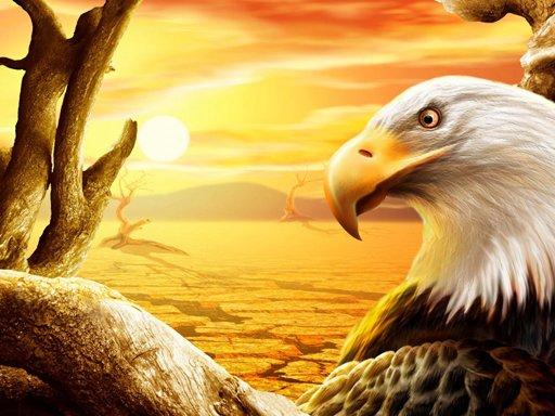 Eagle Slide